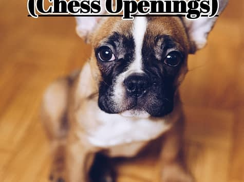 How to Play the French Defense - Chess Openings (ChessLoversOnly)